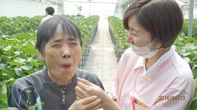 平成28年4月朱咲イチゴ狩り.JPG